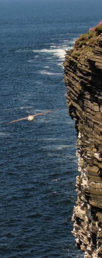 Seabird Colony